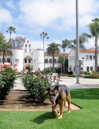 SDSU campus, Fiona, dog